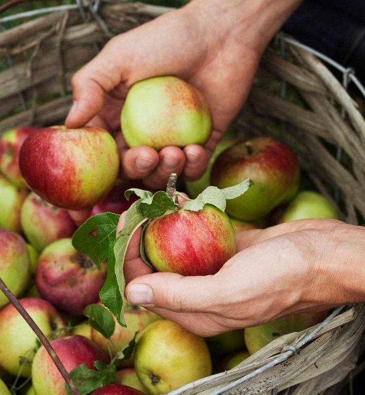 Keep the skin on to get the most out of apples.