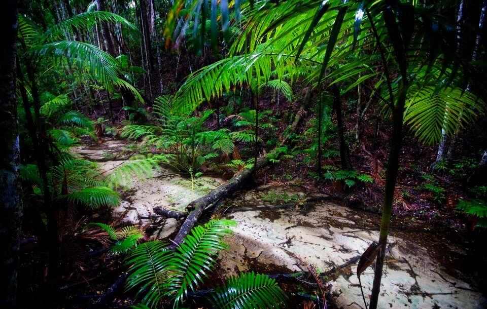 Wanggoolba Creek flowing through a rainforested valley on Fraser Island.