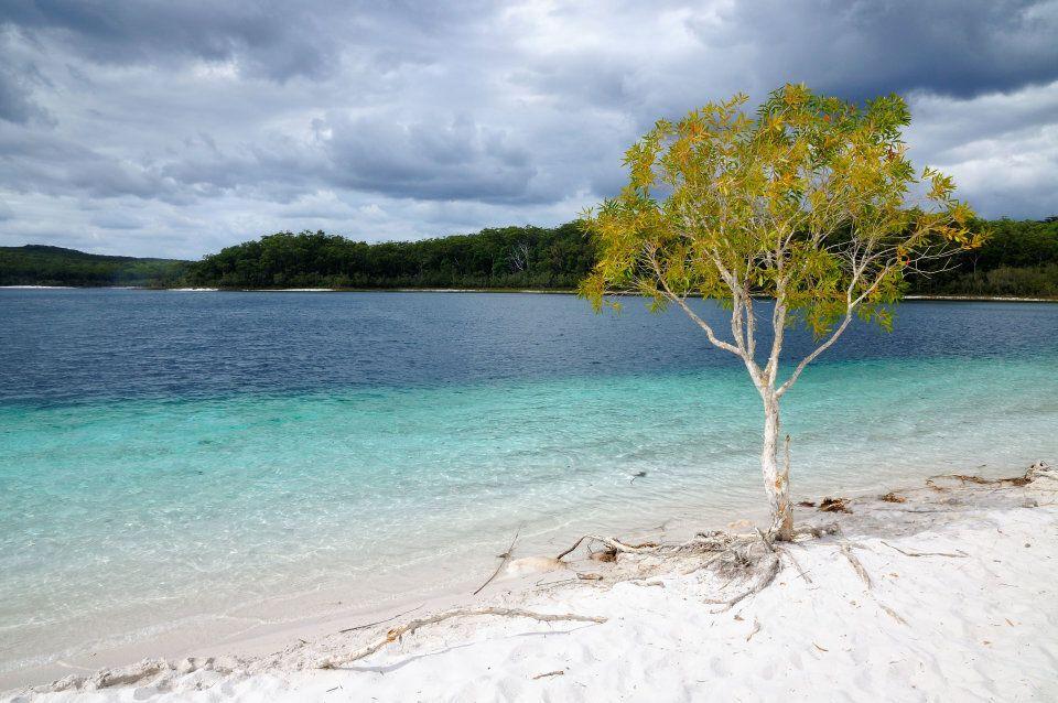 Lake McKenzie has pure white silica sand.