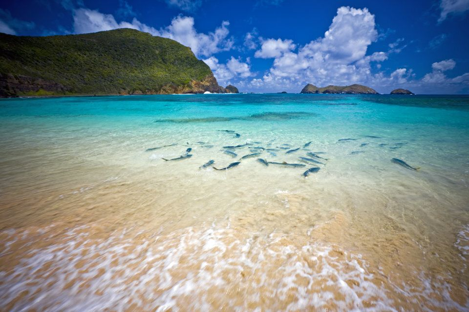 A school of king fish at Lord Howe Island