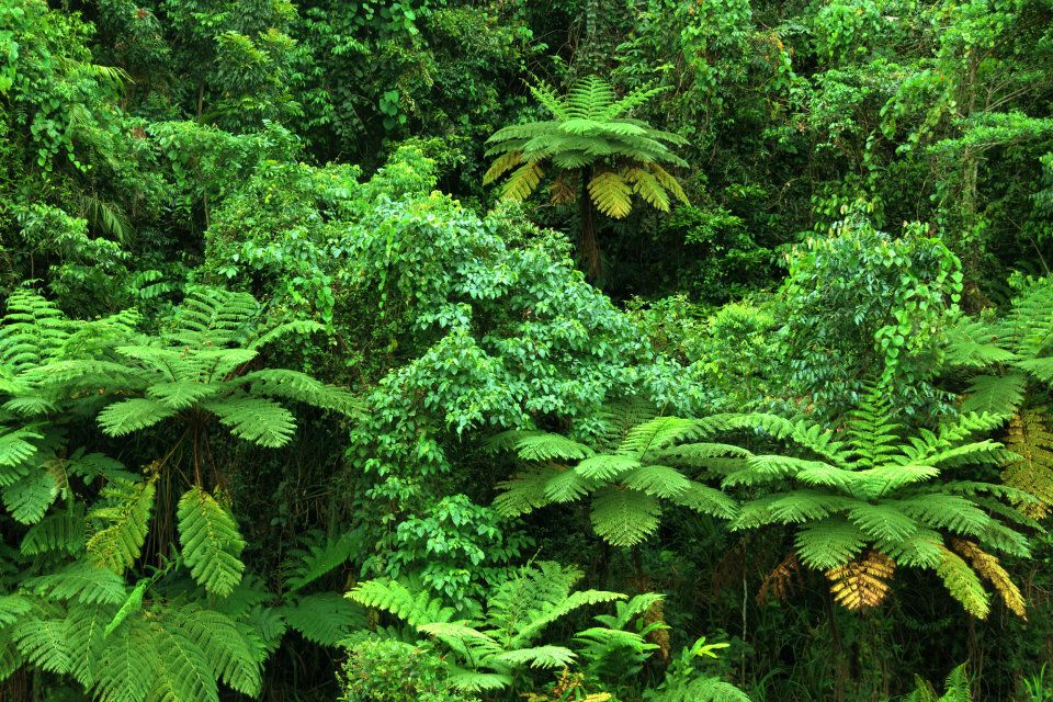 Every inch is carpeted in verdant growth in the Wet Tropics.