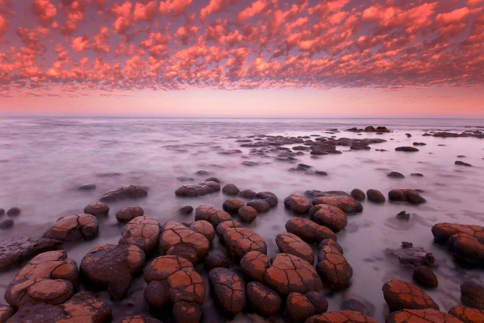 These rocks are stromatolites -- 3000-year-old living things -- and you can see them at Shark Bay.