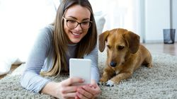 Victorian Renters Get Boosted Pet Powers Under Sweeping Tenant