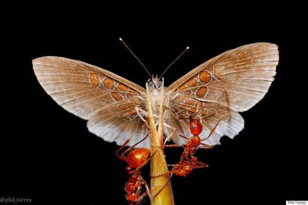 WATCH: This Butterfly and Ant's Relationship Is...
