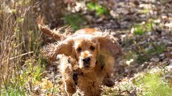 What Dogs Can Teach Us About Being More