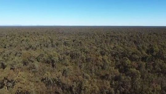 What Lies Beneath: The Battle Over Water, Gas And The Pilliga -- Our Vast, Pristine Inland