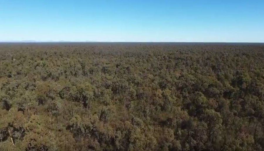 What Lies Beneath: The Battle Over Water, Gas And The Pilliga, Our Vast, Pristine Inland