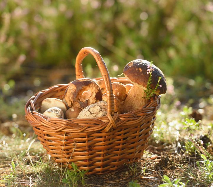 Sun exposure significantly increases the vitamin D content in mushrooms.