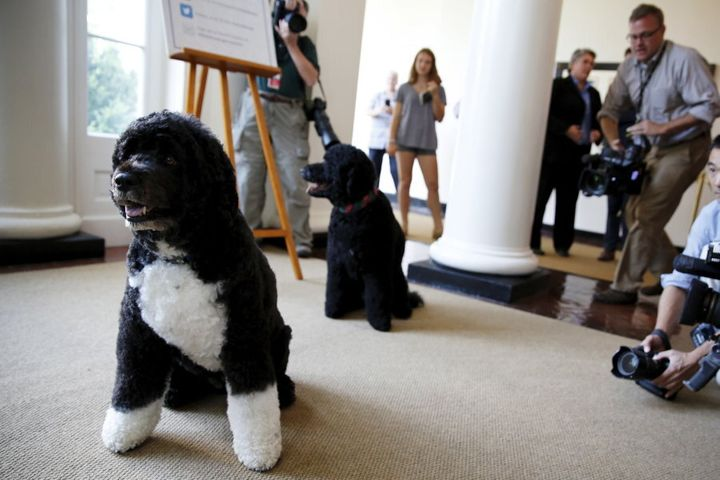 Bo (left) and Sunny at the White House in 2015
