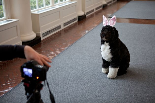 Bo being videotaped for the annual White House Easter Egg
