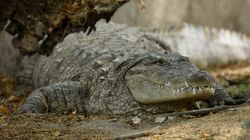 Hunt Continues For Killer Crocodile After Woman's Remains