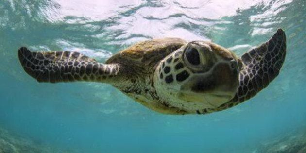 Mon Repos has the largest Logger Head Turtle population in the South Pacific.