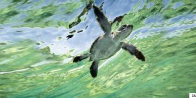 It's Turtle Egg Laying Season At Queensland's Mon Repos