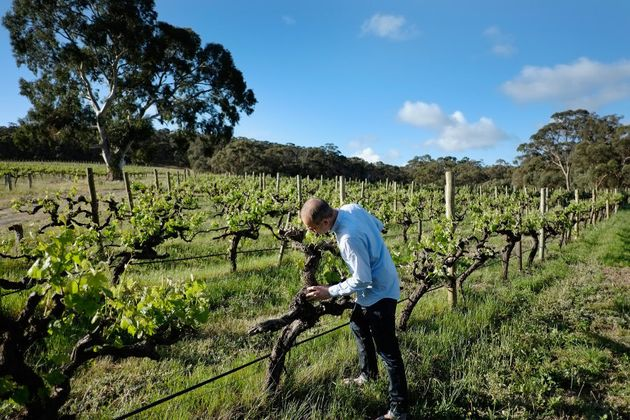 The Mayo electorate is home to some of the state's best wine regions in McLaren Vale and the Adelaide