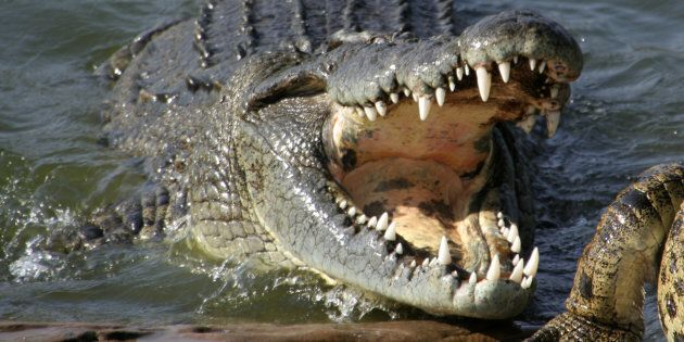Remains Of Elderly Queensland Woman Found Inside Crocodile