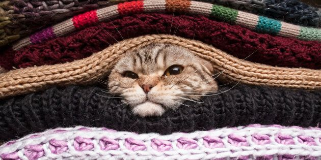 The blanket life.