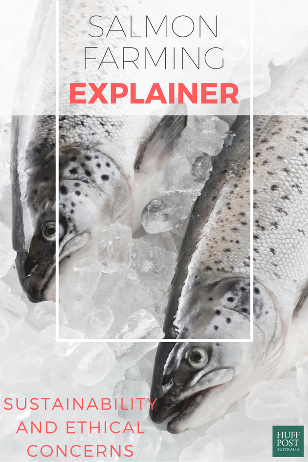 Everything You Should Know About Salmon