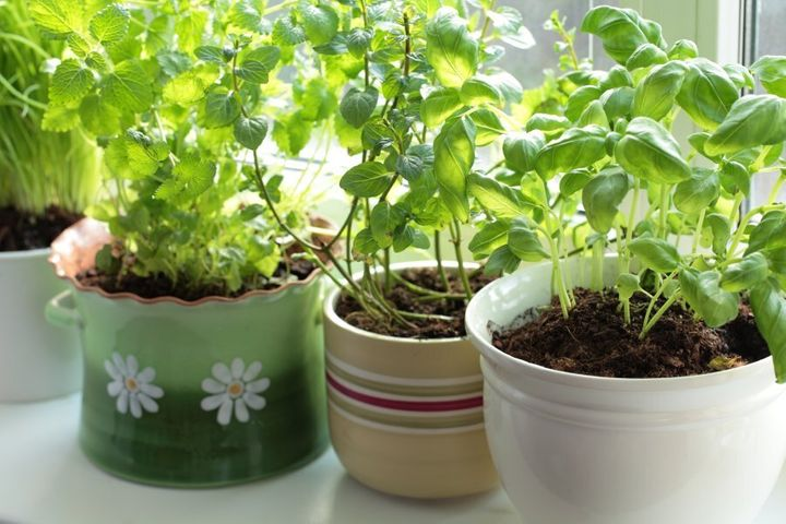 You don't need much space to have a flourishing herb garden.