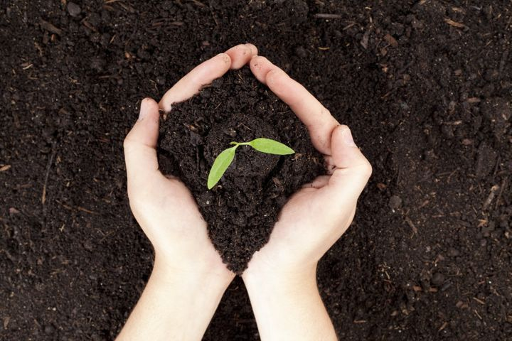 Give back to the environment through home gardening and composting.