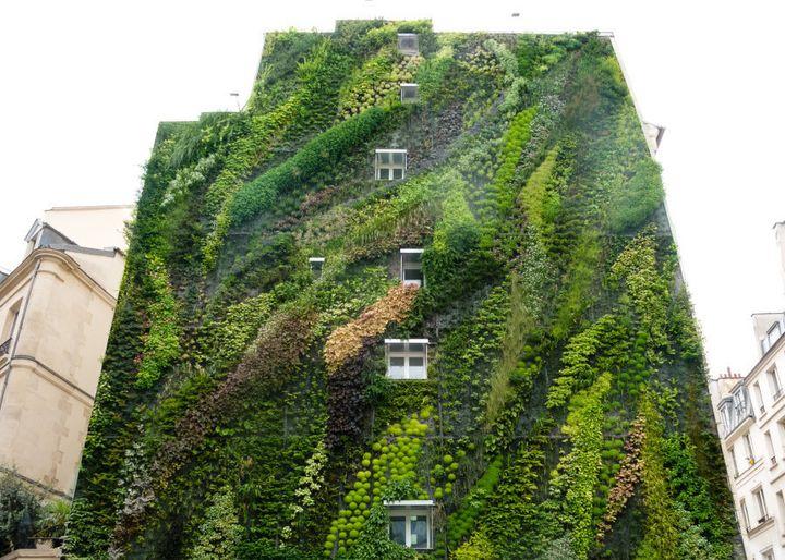 Now that's a vertical garden.