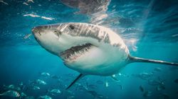 Shark Attack On South Australian Teenager 'Like Everything You Picture In The Jaws