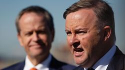 Anthony Albanese Says He Won't Challenge Shorten As Leader...