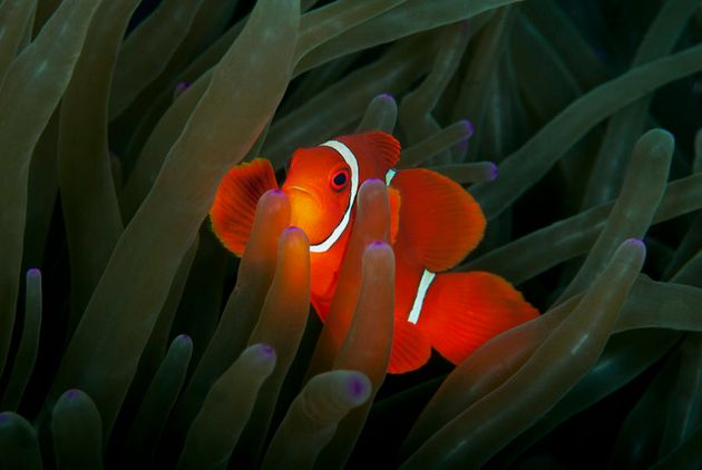 Find Nemo at