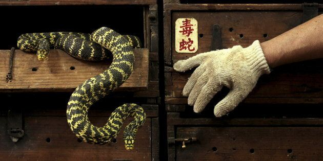 Snakes are smuggled into Australia for the pet