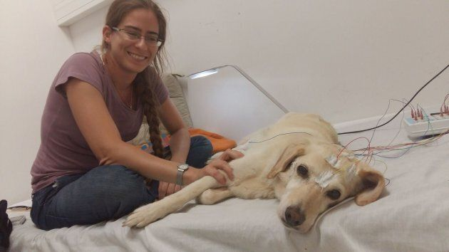 The dogs slept better when their human was