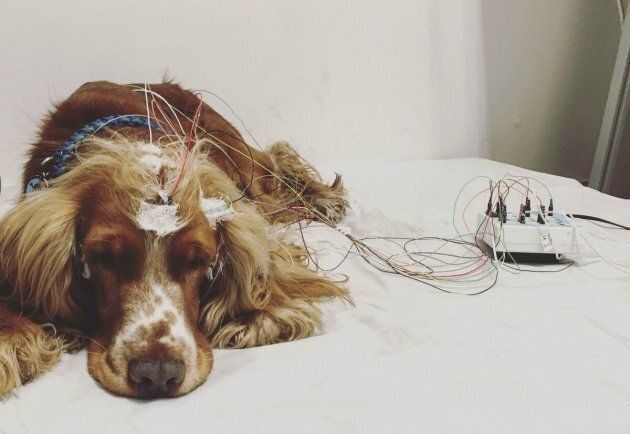 The stressed-out dogs actually fell asleep faster -- even though they didn't sleep as well.