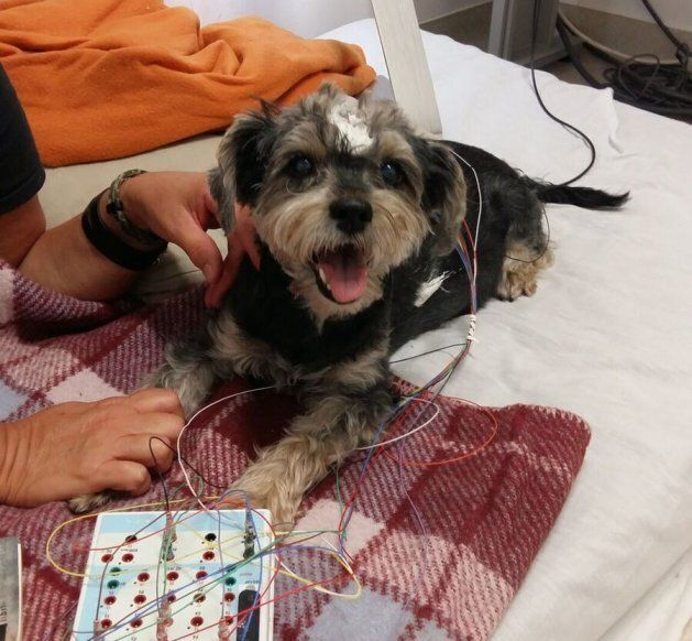 The happy and contented doggos slept
