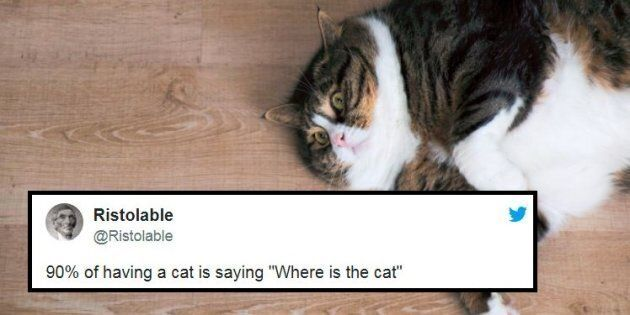 30 Of The Best Tweets About Cats Just Because They're