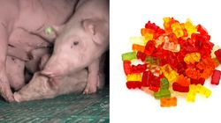 Haribo Gummy Bears Made Using Slave Labour, Documentary