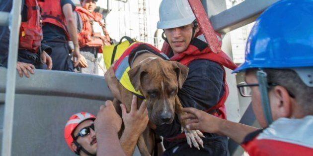 The rescued pair had been issuing distress calls for 98