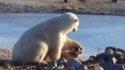 This Polar Bear Petting A Sled-Dog Is A Lot More Sinister Than It