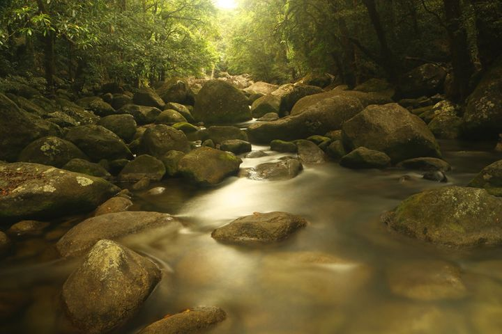 Mossman Gorge's rain-smoothed stones.