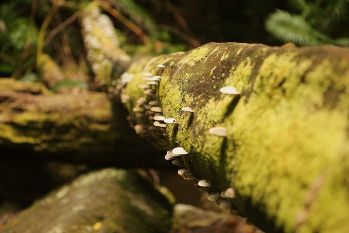 Everything is verdant with growth in Mossman Gorge.