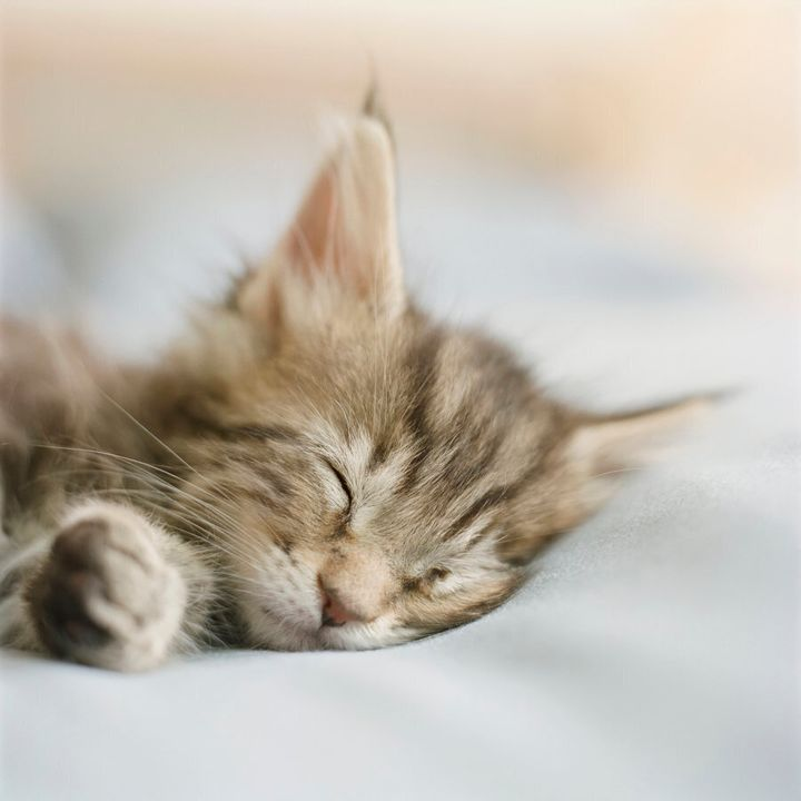 Take inspiration from this sleepy kitty.