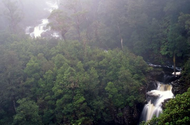 Gloucester Falls, Barrington Tops National Park.