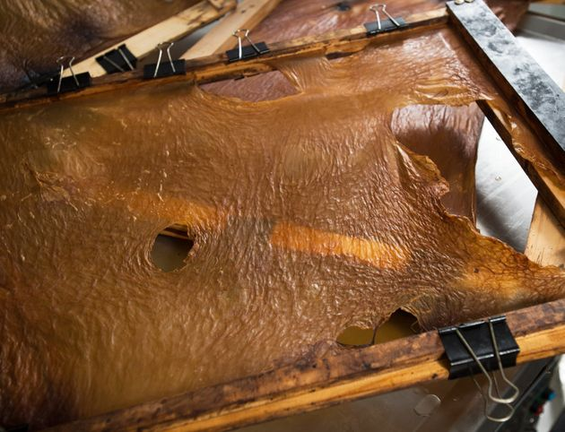Scientists, Designers And Students Are Making 'Vegan Leather' From
