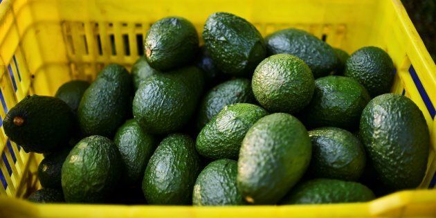Avocados will be super cheap this