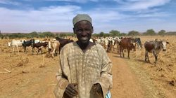 Why Niger And Mali's Cattle Herders Turned To