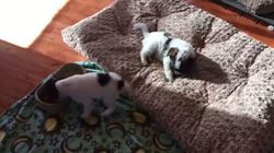 This Rescue Puppy Dances When She Gets