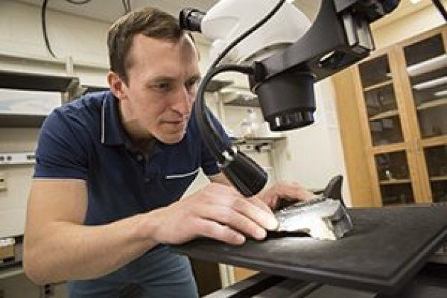 Geologist Erik Gulbranson is studying the tree fossils to see how they survived Antarctica's harsh