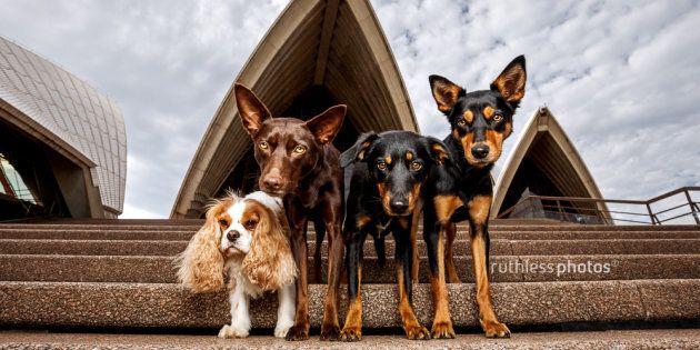 Dogs like opera too.