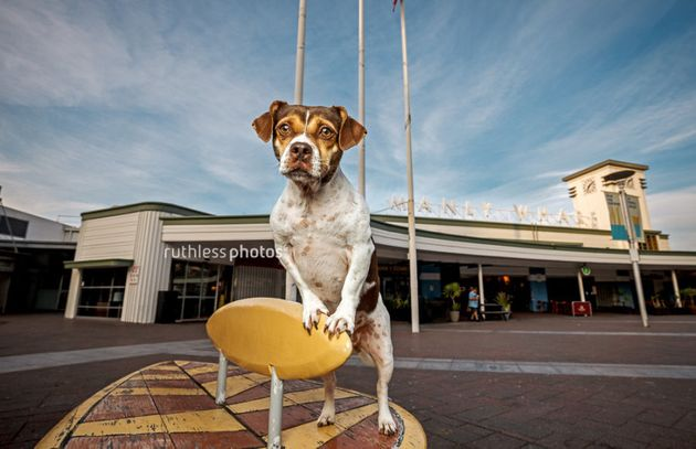 Check Out These Doggies Sightseeing All Over