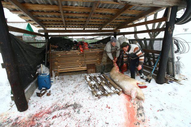 Vladimir Krivenchik, 41, and Nikolay Skidan slaughter a pig at their house in the village of Khrapkovo, Belarus.