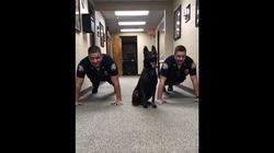 Nitro The Police Dog Showing Officers How To Do Push Ups Is What Your Friday