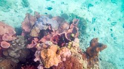 New Coral Transplant Pilot Project Giving Hope To Great Barrier