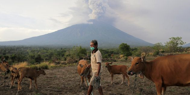 A farmer walks with his cattle as Mount Agung volcano erupts in the background in Karangasem,